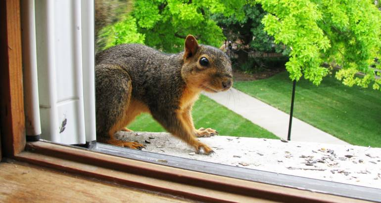 Simple Guide to a Squirrel Free Home